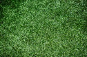 wykładzina trawa